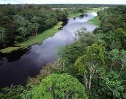 EL AMAZONAS PODRÍA HABER DEJADO DE SER EL PULMÓN DEL MUNDO